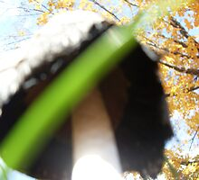 Underbelly of a Mushroom Cap by Felicia722