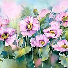 Pink Poppies (Papaver Somniferum) by artbyrachel