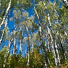 Aspen Aspects by Marc McDonald