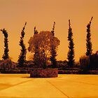 Cypress-like Trees in a Napa Winery, California 2008 by Igor Pozdnyakov