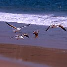 Seagulls Flying on the Beach by Buckwhite