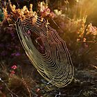 Web in the morning sun by relayer51