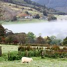 morning mist, snowdonia by photogenic