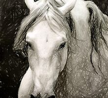 Andalusian Horse Portrait by Oldetimemercan