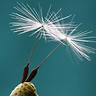 Dandelion Ballet by Kathy Reid