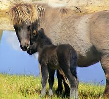 mother and foal by Peta Hurley-Hill