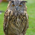 Eagle Owl by Jon Lees