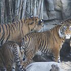 Tigers in Love #1 by min1972