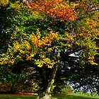 Changing Tree by Andrew Cryer