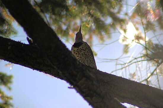 Flicker in Sun by LOJOHA