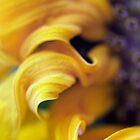 Sunflower Swirl by jeliza