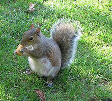 Tame Squirrel by fatchickengirl