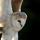 Barn Owl Swoop by Speedster502
