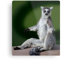Yoga for Lemurs Metal Print