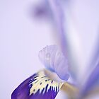 Iris by Sarah-Jane Covey