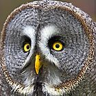 Great Grey Owl by Dave  Knowles