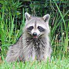 Raccoon Calendar by MichelleR