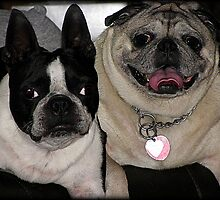 Smushed face friends! by Jenni Atkins-Stair