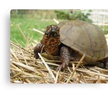 Lucky Turtle Closeup Canvas Print