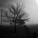 Misty Mornings by friartucker