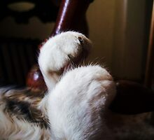 Miss Moxies Sleeping Feet by trueblvr