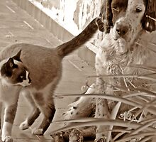 Come on! Play with me! by Berns