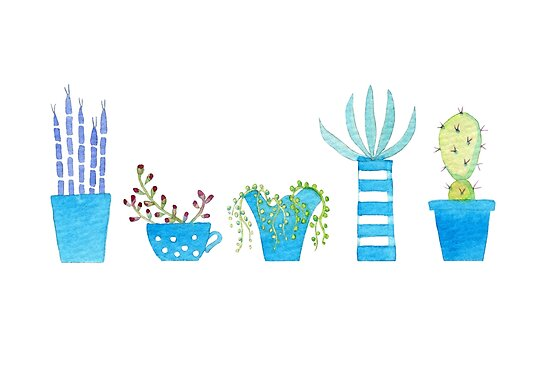 Succulents by Nic Squirrell