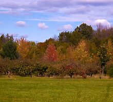 Autumn on the orchard by cherylc1