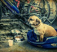 Guardian Of The Bicycles by Nigel Finn