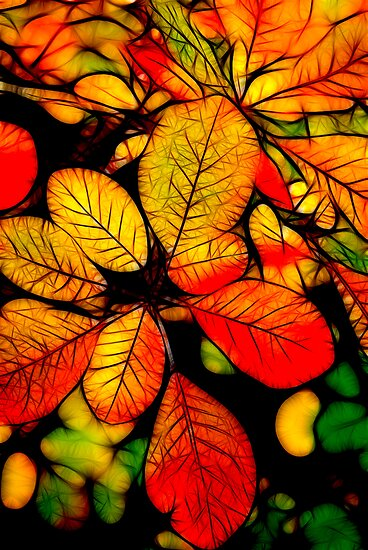 Autumn Leaves by Trevor Kersley
