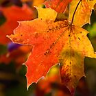Autumn has arrived! by Paul Blackwell