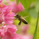 Bumble Bee savoring Red Buds by kellimays