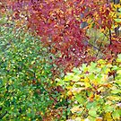 Fall Colors 1 by Orest Macina