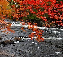 Oxtongue River Rapids by Nancy Barrett