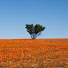 Embracing Spring! Namaqua National Park, South Africa by Fineli