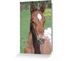 Skyhorse Colida's Legacy Greeting Card