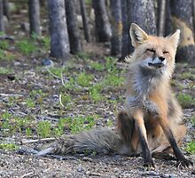 Foxy Loxy the Neighborhood Fox by jpuent09