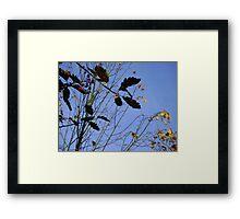 Flying South - autumn leaves, Burntisland Framed Print