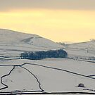 Dales in the snow by Dan Shalloe