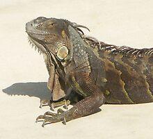 Grandpa Iguana by Bob Hardy