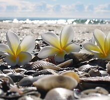 franjipanis and shells by ChristineBetts