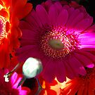 Gerberas. Pink Dream. by Lozzar Flowers & Art