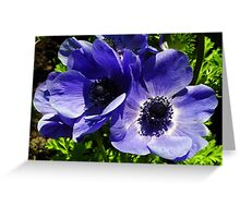 Two Blue Mauve Anemone - Close Up Windflowers Greeting Card