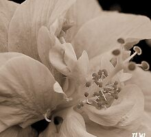 simplistic beauty by jweekley