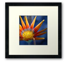 Bright Seeker  © Framed Print