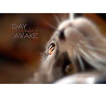 Day Dreaming Awake © Vicki Ferrari Photography Photographic Print