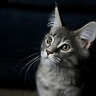 Daisy Boo by JaimeWalsh
