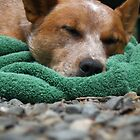 Let Sleeping Dogs Lay. by Amphitrite
