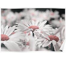 1001 petals v02 Poster