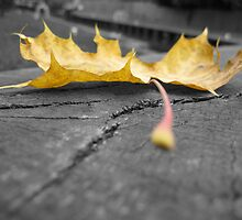 Autunm Leaf by Dannymason